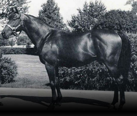 Photo of Citation Racehorse